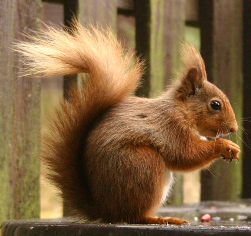 squirrel in austin home for sale